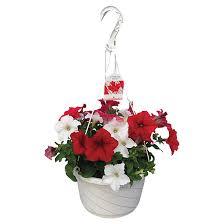 Hanging Flowers Hanging Flower Basket Rona