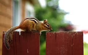 pictures nuts horror windows animals free stock photos amazing