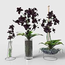 black orchid flower 3d model black orchid set cgtrader
