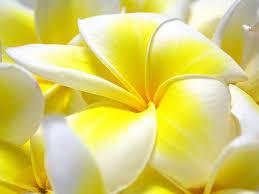 hd images of flowers images of flower wallpaper desktop full sc