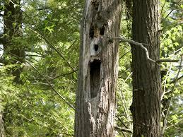 top ten trees in horror popcorn horror