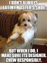 I Make Shoes Meme - image tagged in the most interesting dog in the world imgflip