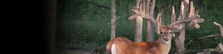 heartland wildlife deer feed for growing bigger racks