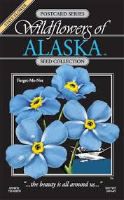 forget me not seed packets product detail forget me not