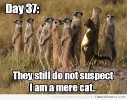 Cat Cocaine Meme - cat archives page 974 of 983 cat planet cat planet