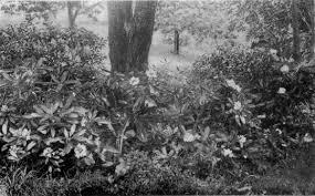 2010 05 01 Archive Wild Garden Hansen U0027s Northwest Native Plant Database