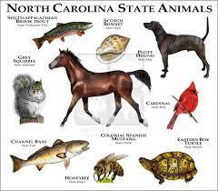 wildlife art state animals north carolina state animals