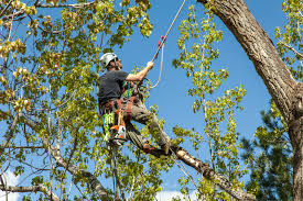 bbb business profile kaily s tree service