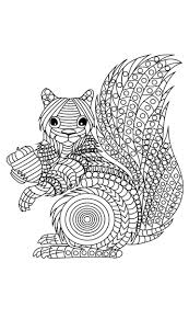 wildlife coloring book 215 best coloring rodent images on pinterest colouring