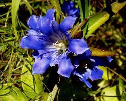 wisconsin native plants native plants and pollinator friendly habitat sogn valley farm