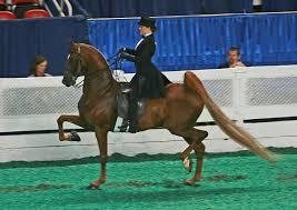 horse saddle saddle seat wikipedia