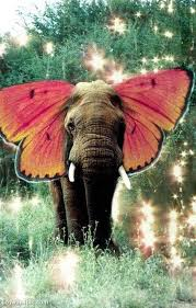 butterfly elephant pictures photos and images for