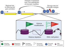 when stem cells grow old phenotypes and mechanisms of stem cell