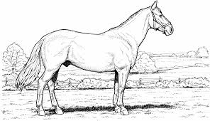 free printable anatomy coloring pages anatomy se coloring pages horses pinterest wild