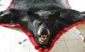 Taxidermy Bear Rug Bear Rugs Wisconsin Animal Rug Taxidermist Wausau Wi