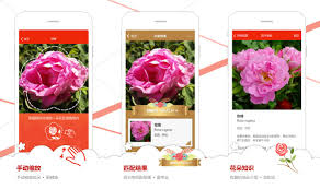 Flower Garden App by Microsoft Garage U0027s Flower Recognition App Now Available In China