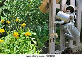 hanging metal watering cans stock photo royalty free image