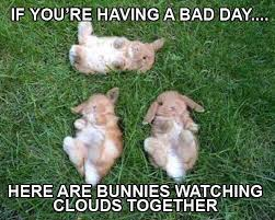 Having A Bad Day Meme - 135 best memes i ve made images on pinterest meme memes and