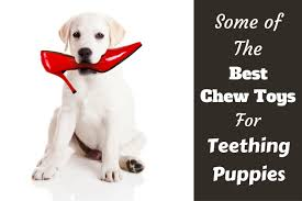 Best Dog Bed For Chewers Best Chew Toys For Puppies While Teething