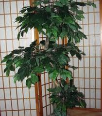 search creative plant interiors