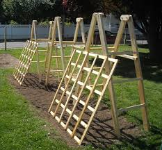 decorating using amusing trellises for beautiful outdoor tomato ladders and cucumber trellises for outdoor decoration ideas