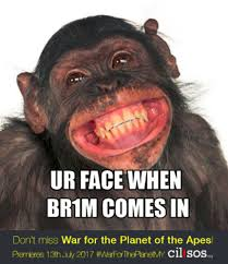 Ape Meme - update omg apes are taking over cilisos articles spot the monyet