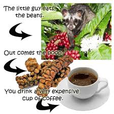 Luwak Coffee kopi luwak coffee the most expensive coffee high quality coffee