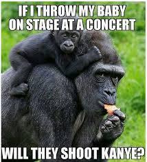 Funny Gorilla Memes - harambe cincinnati zoo gorilla funny pinterest hilarious and memes
