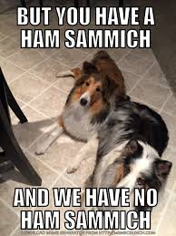 Sammich Meme - but you have a ham sammich imgur