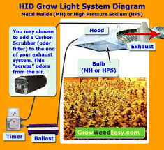 best hps grow lights 17 best grow lights images on pinterest grow lights bud and human eye