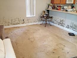 Kill Carpet Mold Should I Clean Or Pitch Belongings After Mold Removal Angie U0027s List