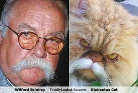 Wilford Brimley Diabeetus Meme - battle wilford brimley and diabeetus cat vs david bowie and