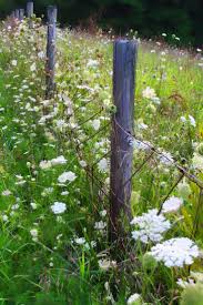best 25 old fences ideas only on pinterest country garden