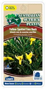 australis plants australian native plants australian native plant nursery u2014 australian outback plants