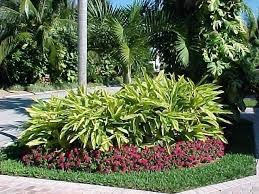Texas Landscape Plants by Tropical Landscaping Houston Tropical Landscape Plants Houston