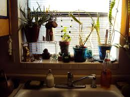 Kitchen Windowsill Monday U2013 Liza U0027s Plants Ode To Kitchen Sinks And Windowsill Plants