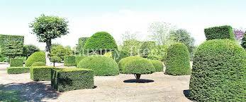 Pflanzen Fur Japanischen Garten Japanische Bäume U0026 Pflanzen Online Kaufen Luxurytrees Shop