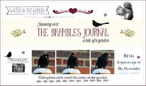 winter in the garden the brambles journal january 2017 the