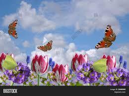 composition spring flowers image u0026 photo bigstock