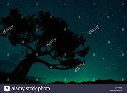 northern lights jasper national park silhouette of tree against northern lights in jasper national park