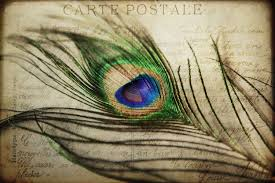 carte postale peacock feather vintage french postcard love