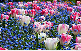 spring flowers in the garden are a joy of covers eye and the