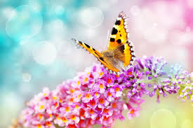butterfly flower butterfly on flower stock photo image of bokeh summer 24727306