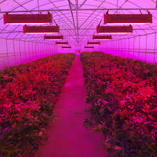 led lights for indoor plants 400w led grow lights full spectrum indoor plant l for plants ir