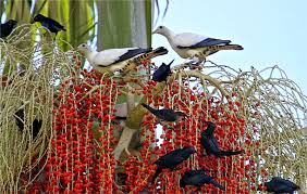 bangalow tree tales attracting birds to your garden for a song
