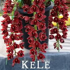 Red Orchids Compare Prices On Red Cymbidium Orchid Online Shopping Buy Low