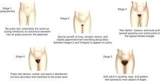 male pubic hair trimmed photos unique sts physicins pubic hair male vs female pubic hairstyles