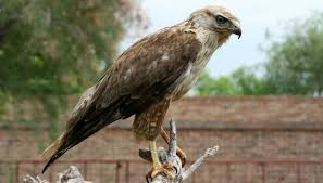 Georgia Birds images List of birds of prey in georgia animals mom me jpg