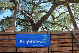 brightview tree company relocates 700 000 pound oak brightview