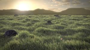 sanvi interiors grass floor loversiq